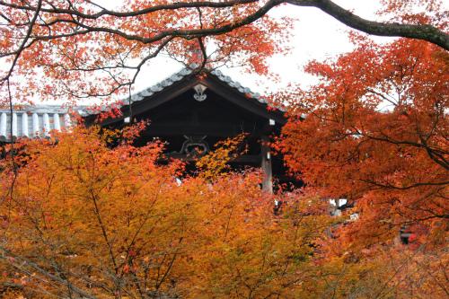 東福寺と嵯峨野の紅葉を楽しむ  京都_d0055236_2145542.jpg