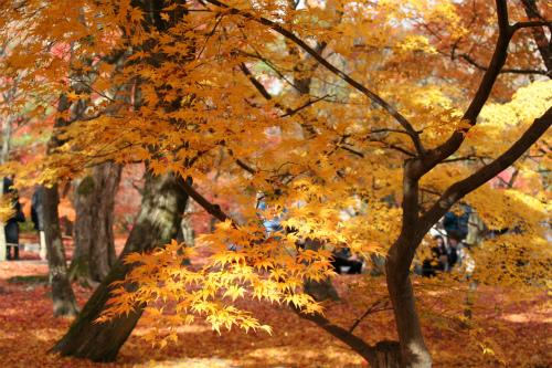 東福寺と嵯峨野の紅葉を楽しむ  京都_d0055236_21483763.jpg