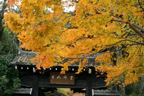 東福寺と嵯峨野の紅葉を楽しむ  京都_d0055236_21512222.jpg