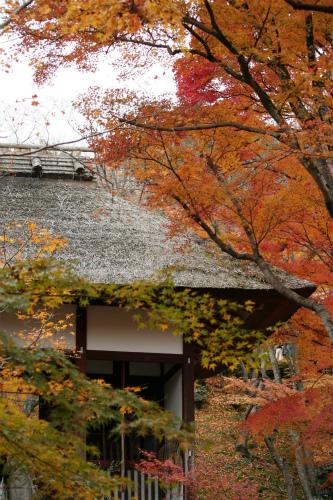 東福寺と嵯峨野の紅葉を楽しむ  京都_d0055236_21522644.jpg