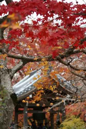 東福寺と嵯峨野の紅葉を楽しむ  京都_d0055236_21524673.jpg