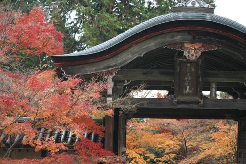東福寺と嵯峨野の紅葉を楽しむ  京都_d0055236_21532552.jpg