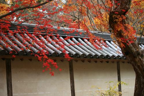 東福寺と嵯峨野の紅葉を楽しむ  京都_d0055236_2156564.jpg