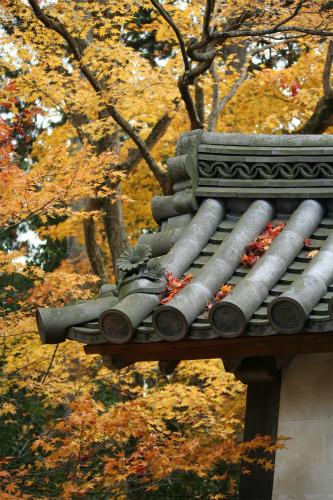 東福寺と嵯峨野の紅葉を楽しむ  京都_d0055236_2210521.jpg
