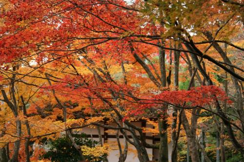 東福寺と嵯峨野の紅葉を楽しむ  京都_d0055236_2215031.jpg