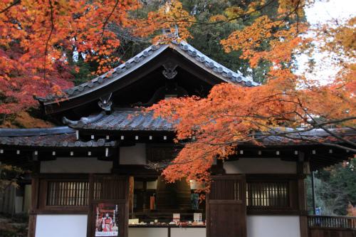 日吉神社・大原の紅葉   滋賀 京都_d0055236_22415994.jpg