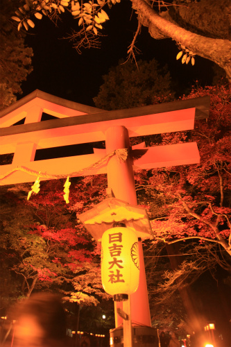 日吉神社・大原の紅葉   滋賀 京都_d0055236_22421715.jpg