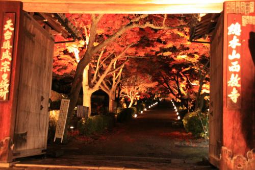 日吉神社・大原の紅葉   滋賀 京都_d0055236_22422158.jpg