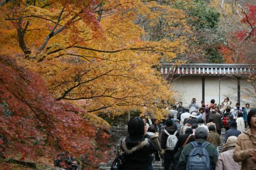 東福寺と嵯峨野の紅葉を楽しむ  京都_d0055236_2244635.jpg