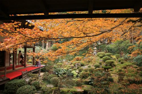 日吉神社・大原の紅葉   滋賀 京都_d0055236_22452171.jpg