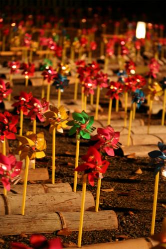 東福寺と嵯峨野の紅葉を楽しむ  京都_d0055236_22515471.jpg
