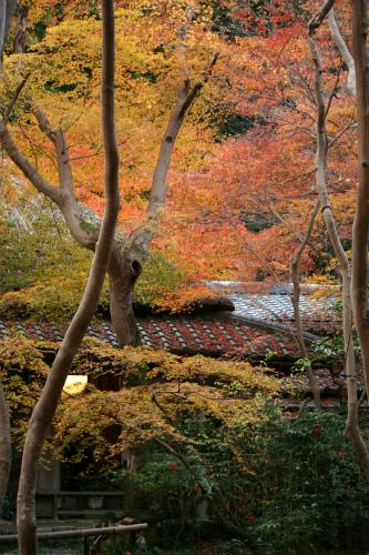 東福寺と嵯峨野の紅葉を楽しむ  京都_d0055236_2263189.jpg