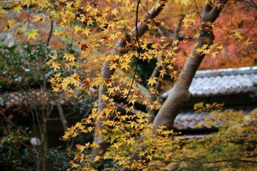 東福寺と嵯峨野の紅葉を楽しむ  京都_d0055236_2273666.jpg