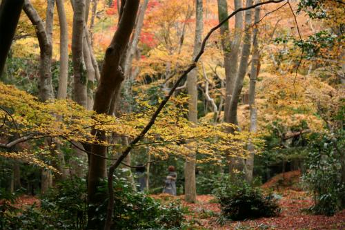 東福寺と嵯峨野の紅葉を楽しむ  京都_d0055236_2275112.jpg