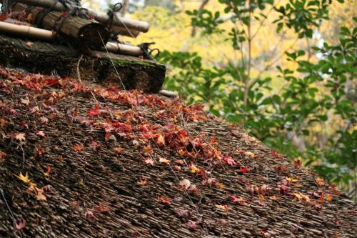 東福寺と嵯峨野の紅葉を楽しむ  京都_d0055236_227639.jpg