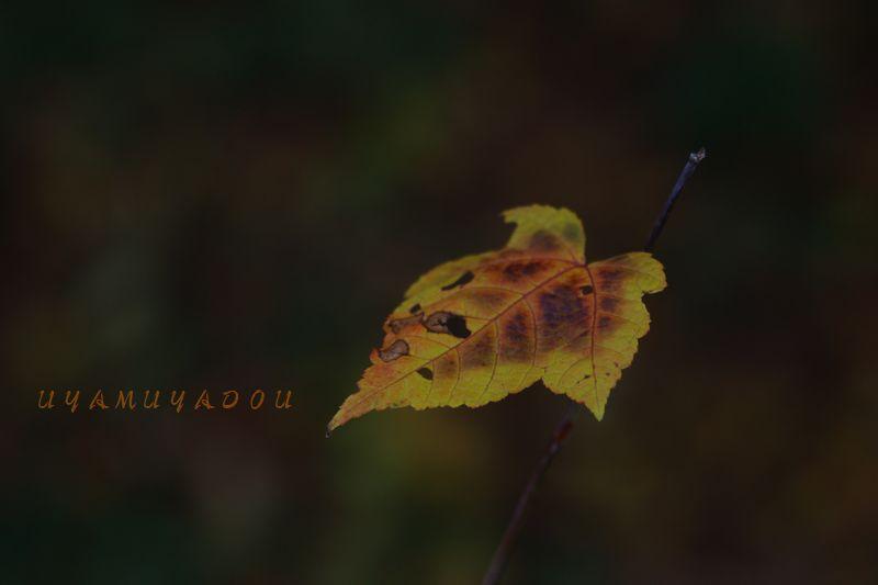 秋の山_a0157263_23255012.jpg