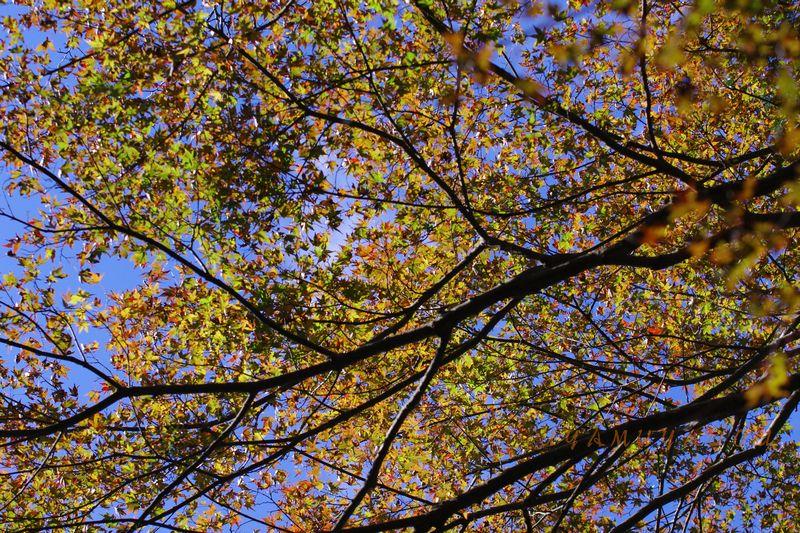 秋の山_a0157263_23271389.jpg