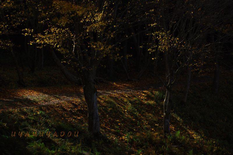 秋の山_a0157263_23275811.jpg