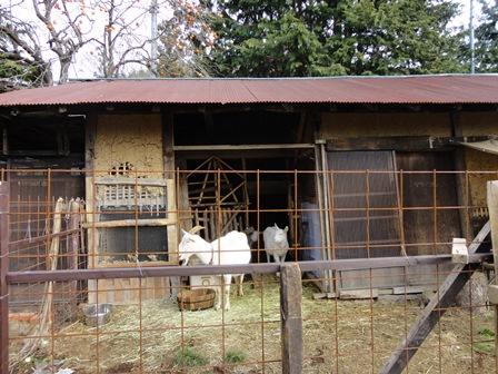 堆肥作り+engawacafe_d0152765_21334287.jpg