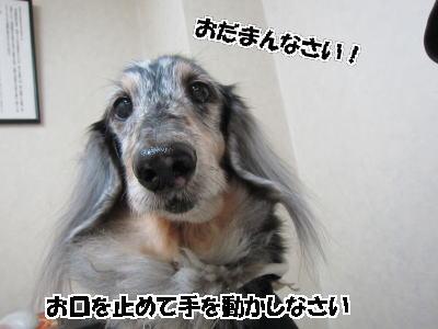 d0020869_1250296.jpg