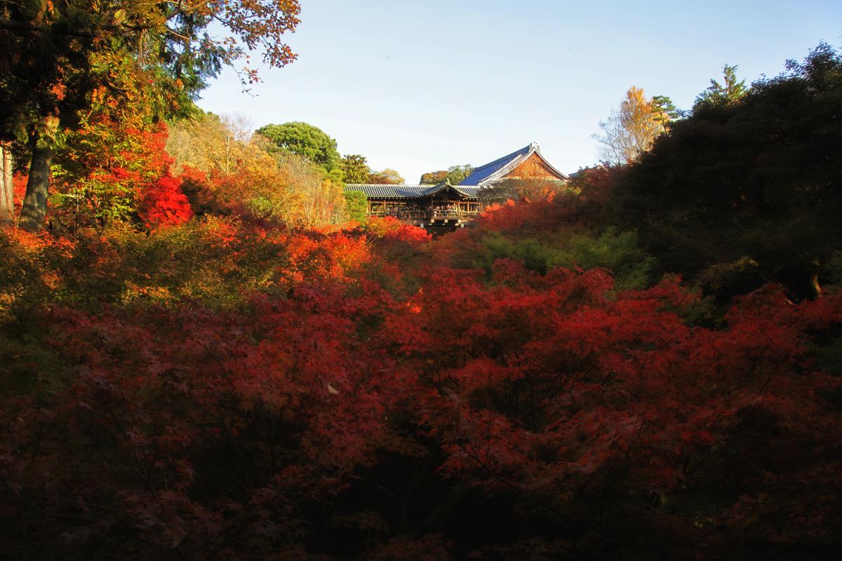 紅葉 2012  東福寺_f0021869_2255154.jpg
