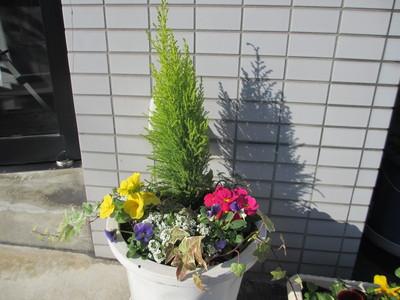 冬の寄せ植え_e0150006_21465129.jpg