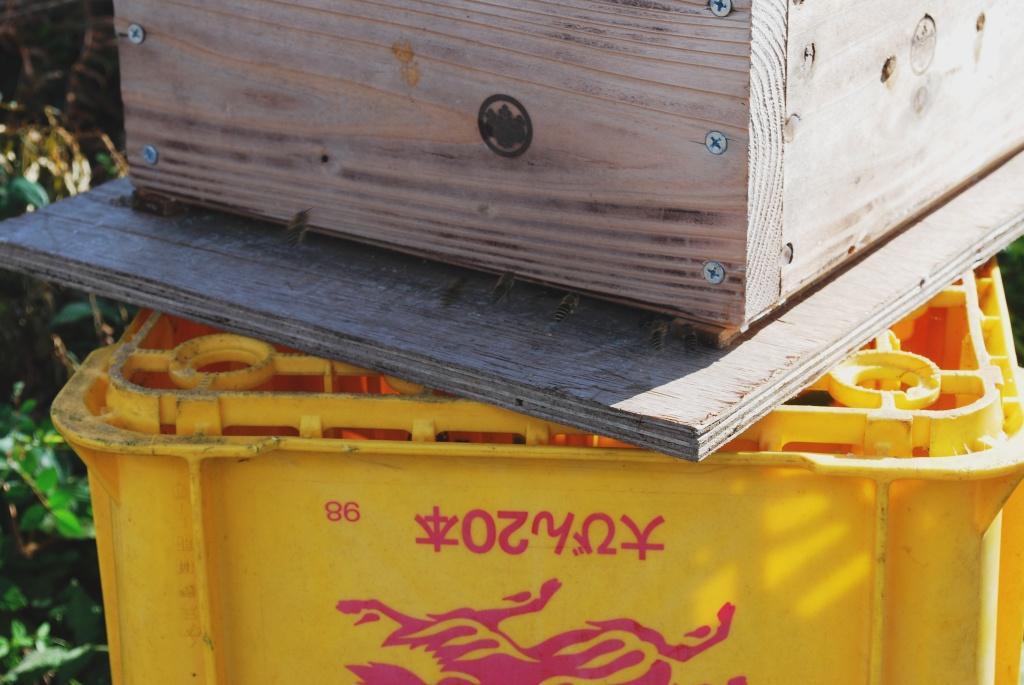 蜂は元気_f0176521_1324169.jpg