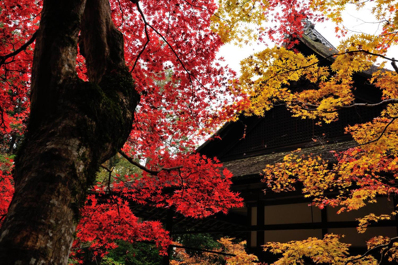 京都報告 その5(最終)_c0220824_18241912.jpg