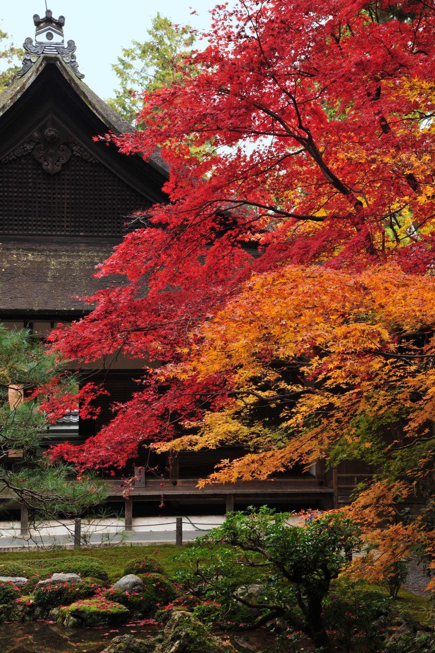 京都報告 その5(最終)_c0220824_1945077.jpg