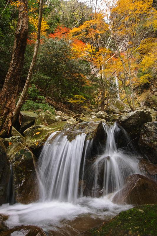 まぼろしの滝 秋景(和歌山県古座川町)_a0097330_2024080.jpg