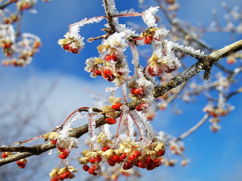 冬景色がやって来ました。_b0179231_02337100.jpg