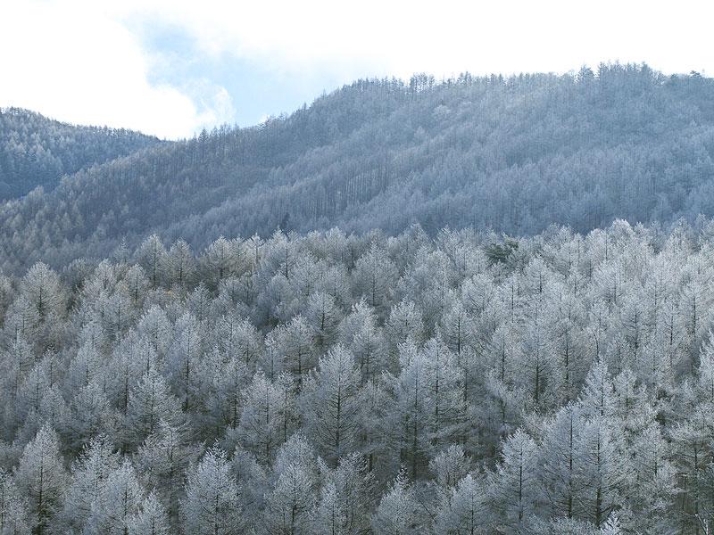 冬景色がやって来ました。_b0179231_0234346.jpg
