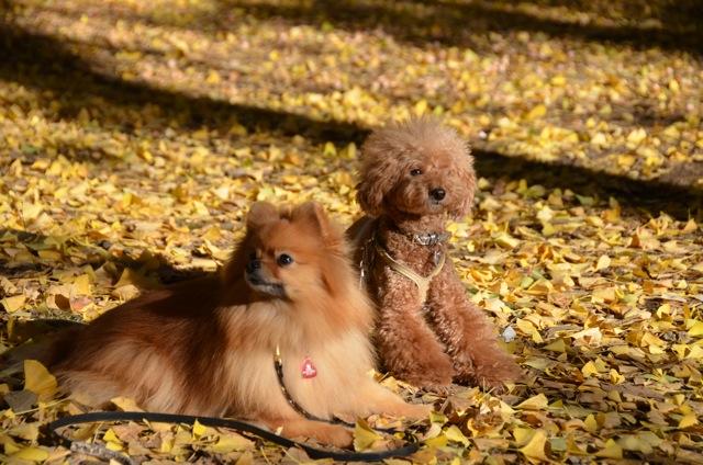 秋のお散歩グループクラス無事終了_c0099133_14432622.jpg