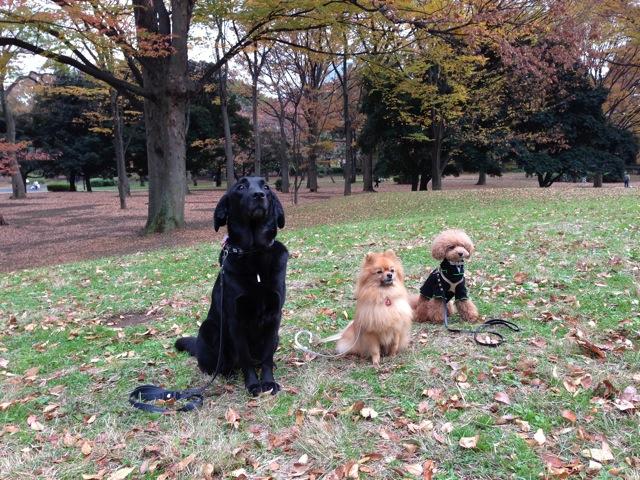 秋のお散歩グループクラス無事終了_c0099133_14435378.jpg