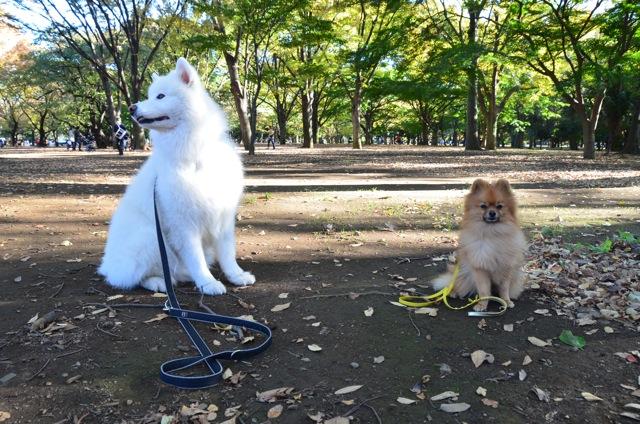 秋のお散歩グループクラス無事終了_c0099133_14442287.jpg
