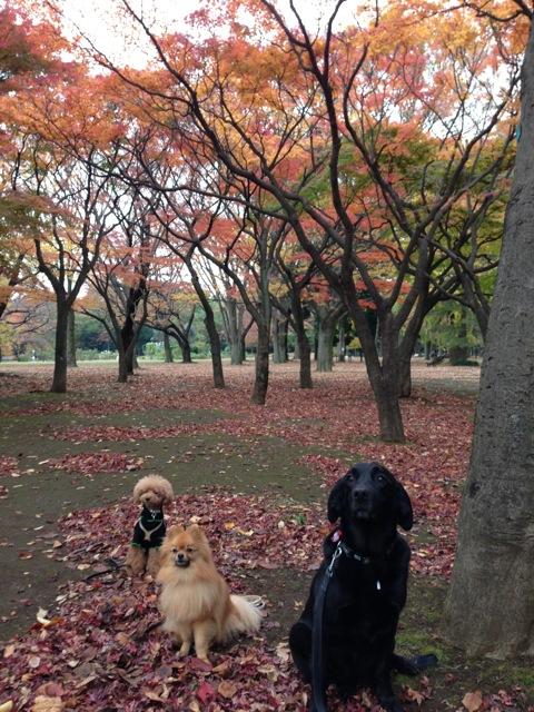 秋のお散歩グループクラス無事終了_c0099133_1450533.jpg