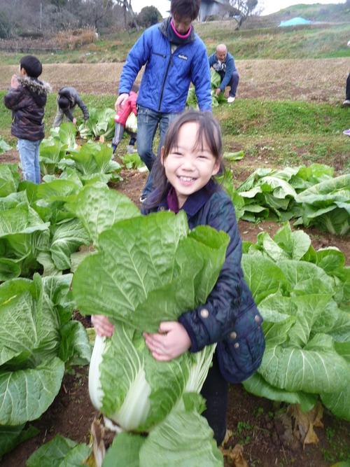 『円城白菜』収穫祭開催しました!_b0211845_11145615.jpg