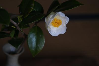 花だより・青松白瓷お知らせ_a0279848_21494932.jpg