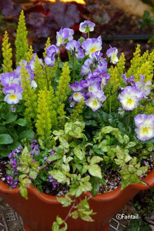 フラワーポットと植物_d0229351_0451052.jpg