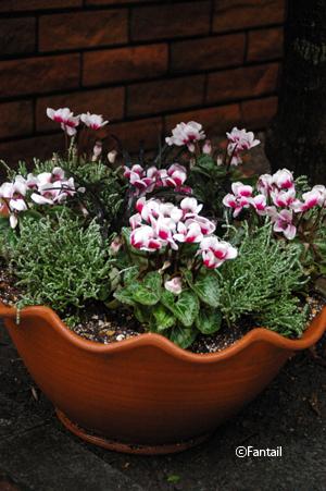 フラワーポットと植物_d0229351_0451454.jpg