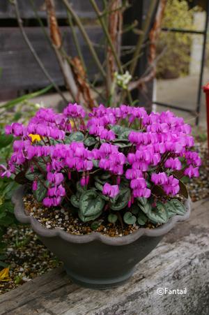 フラワーポットと植物_d0229351_04584.jpg