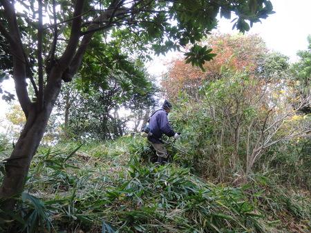 カブトムシ幼虫のためにチップを運ぶ  in  うみべの森_c0108460_1726033.jpg
