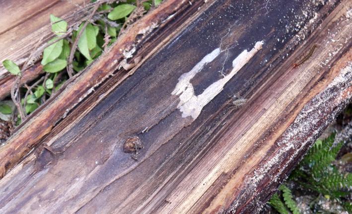 形状不良のスギは虫の巣窟!:12・4六国見山臨時手入れ_c0014967_1838417.jpg