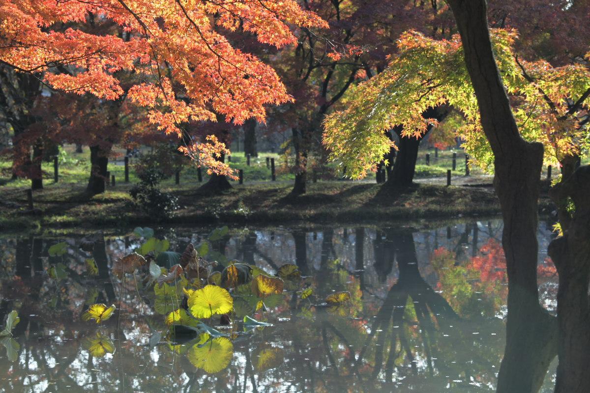 紅葉 2012  京都府立植物園_f0021869_23195285.jpg