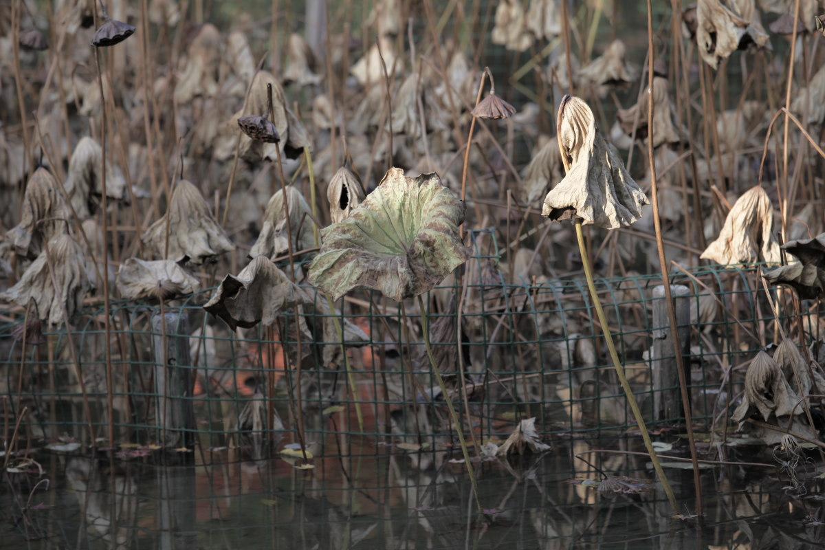 紅葉 2012  京都府立植物園_f0021869_23202335.jpg