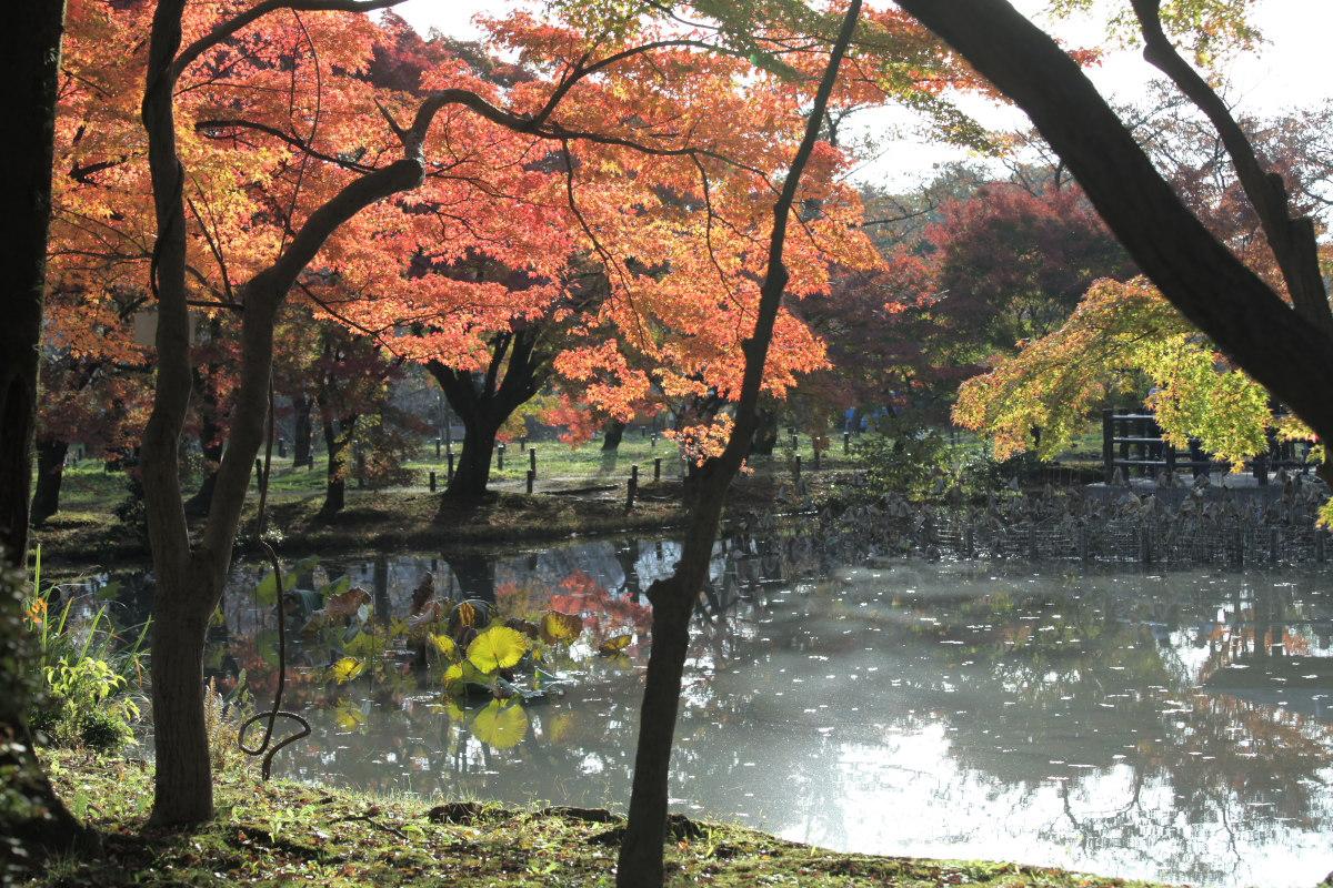 紅葉 2012  京都府立植物園_f0021869_23205629.jpg