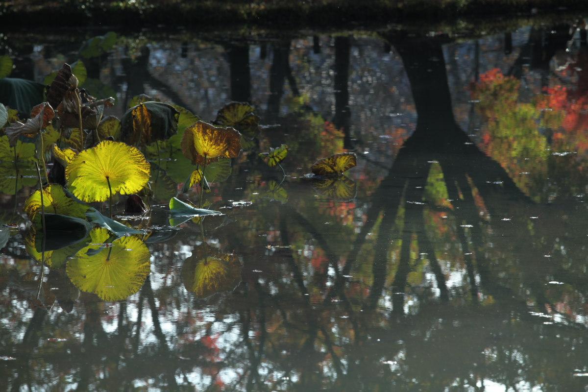 紅葉 2012  京都府立植物園_f0021869_23212749.jpg