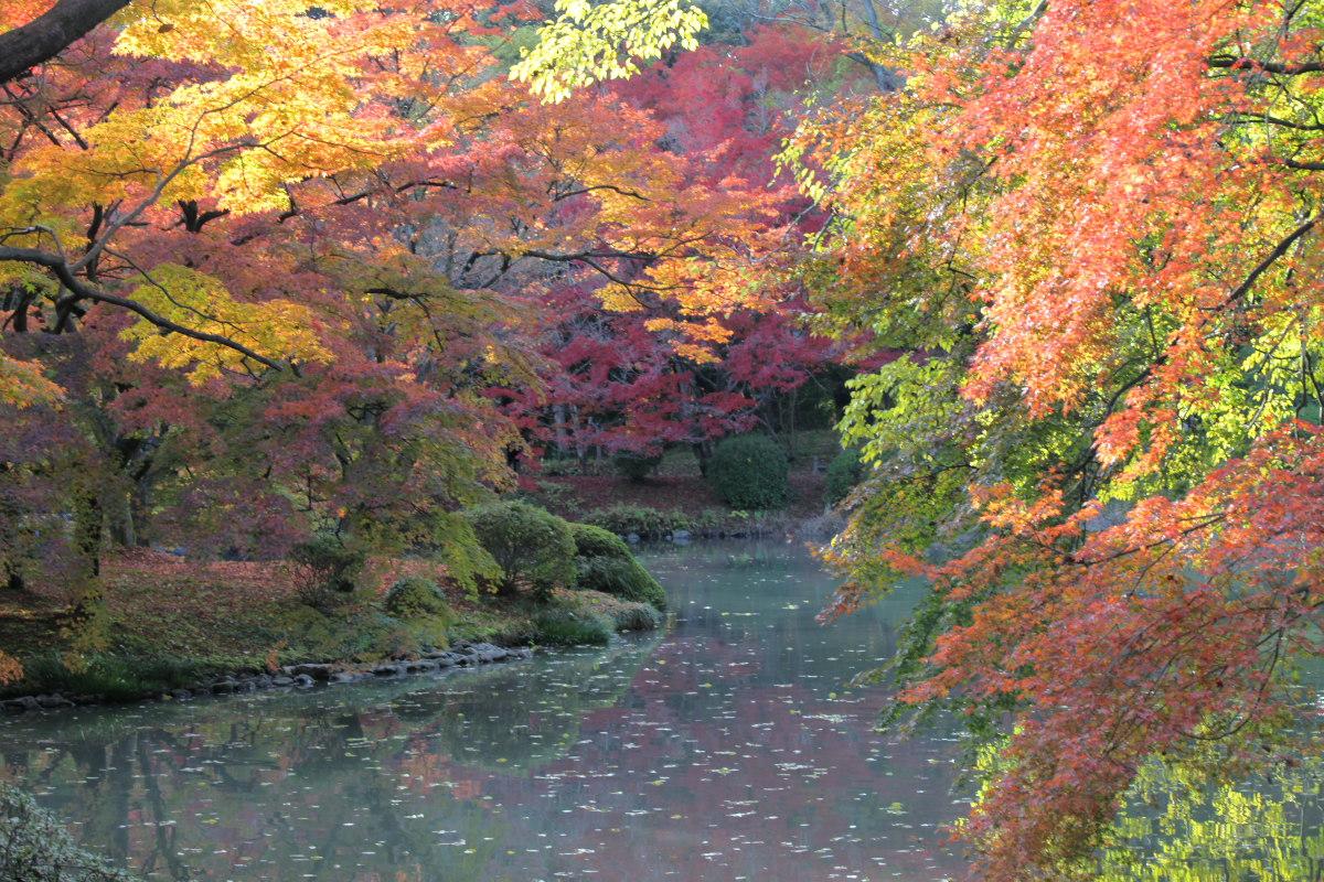 紅葉 2012  京都府立植物園_f0021869_2321524.jpg