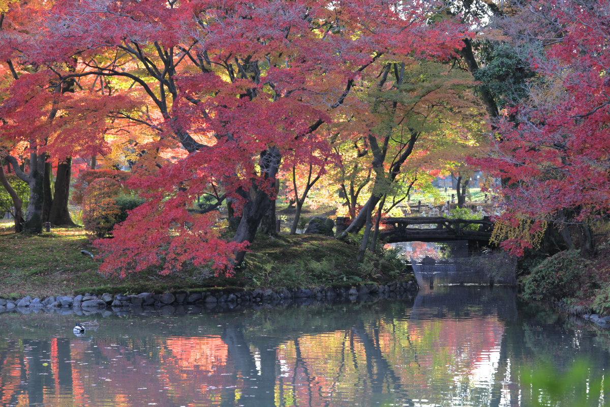 紅葉 2012  京都府立植物園_f0021869_23223062.jpg