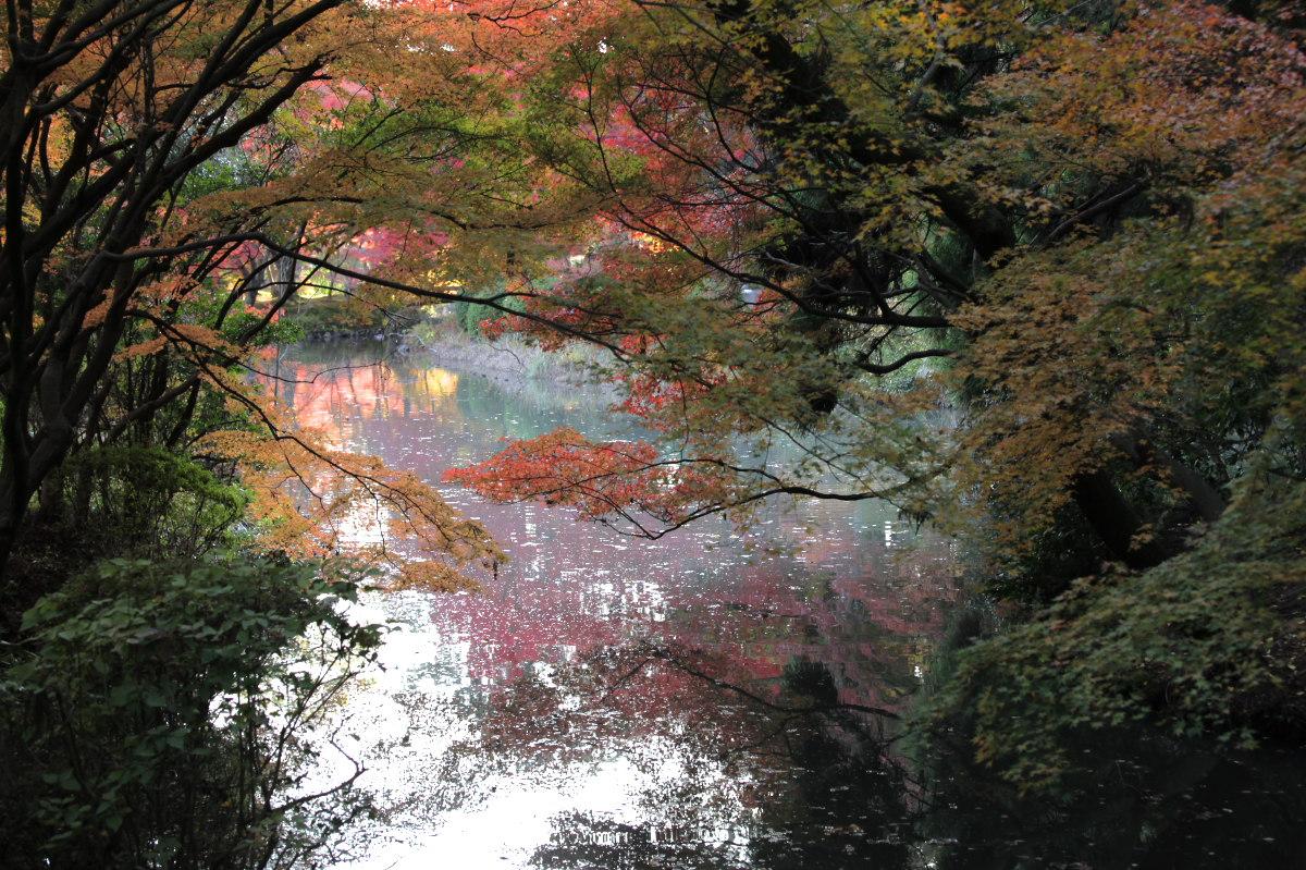 紅葉 2012  京都府立植物園_f0021869_23224950.jpg